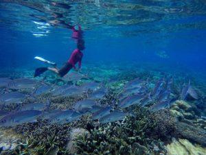diving at misool island