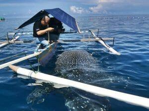 whale sharks tourism