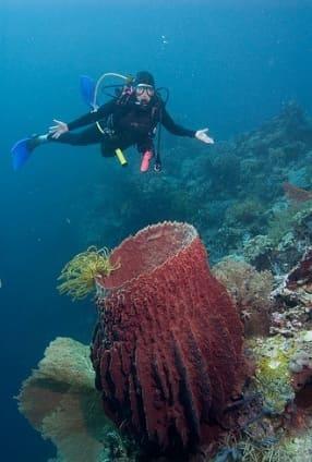 Wakatobi National Park Diving