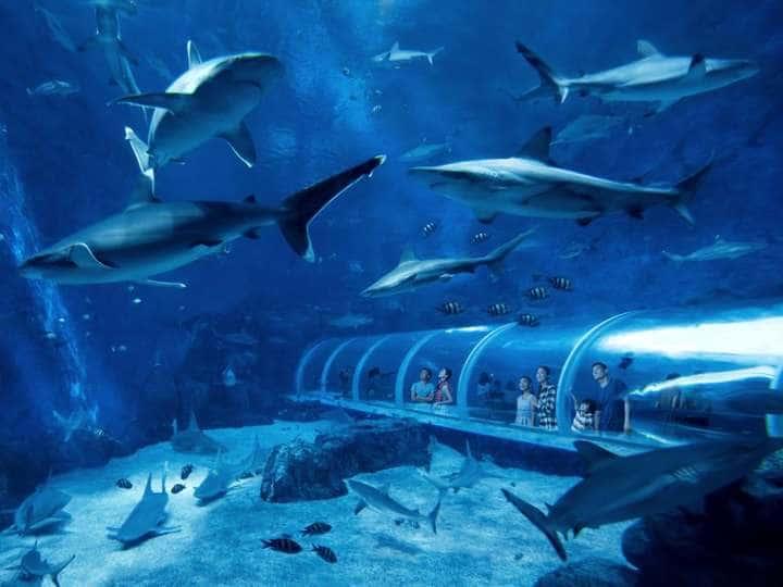 Exhibits Ocean Wonders & Meet The Sharks at Sea Aquarium, Singapore!
